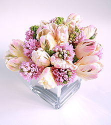 Pink Parrot Tulips & Hyacinths